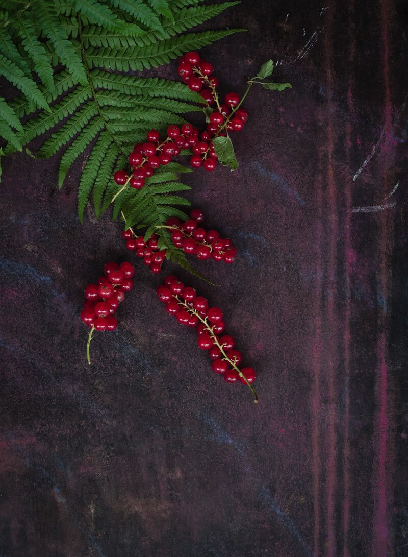 red currant curd johannisbeercurd trickytine