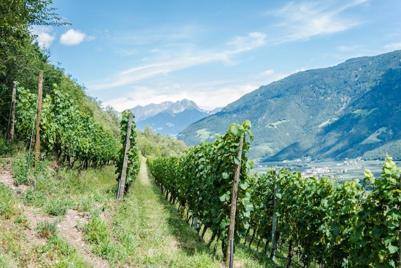 suedtirol trickytine food travel preidlhof meran naturns