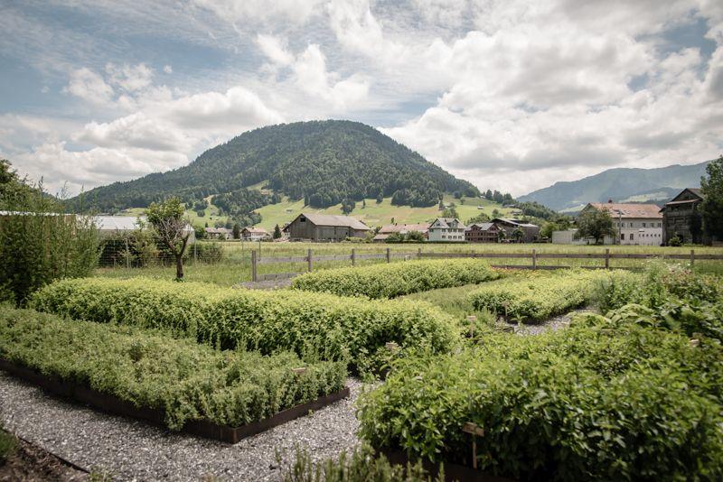 #sennermeetsblogger wildkraeuter bregenzerwald trickytine