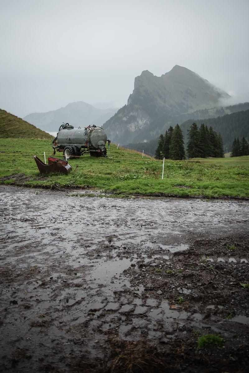 alpabtrieb trickytine bregenzerwald