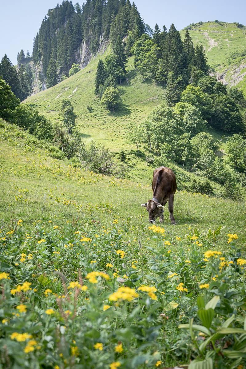 Alpe-Unterguentenstall-trickytine-Senner-Vorarlberger-Bergkaese_