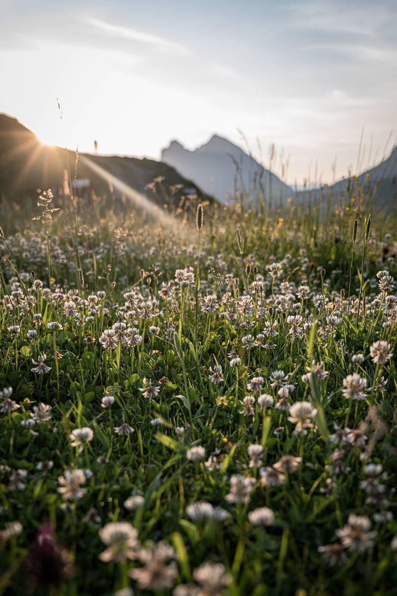 Senner Alpe Wildgunten trickytine Bregenzerwald