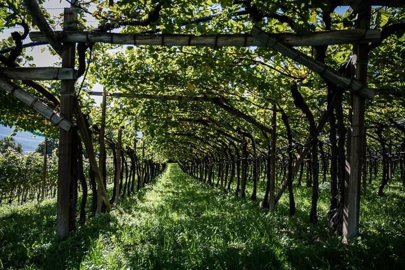 #friendsgivingsüdtirol Südtirol trickytine Wein
