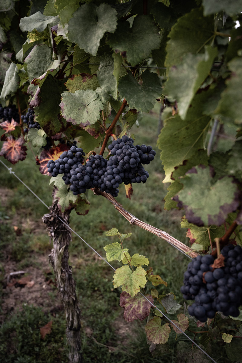 Weinsüden Heilbronn Wein Reise trickytine