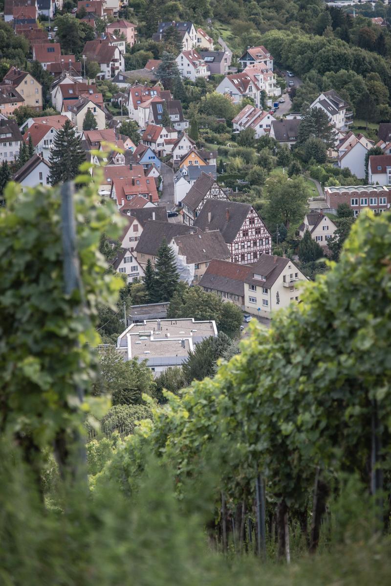 Riesling Glühwein Stuttgart