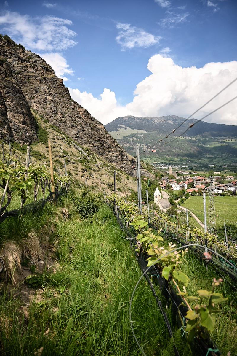 Genussreise in Südtirol Winzerin Hilde van den Dries trickytine