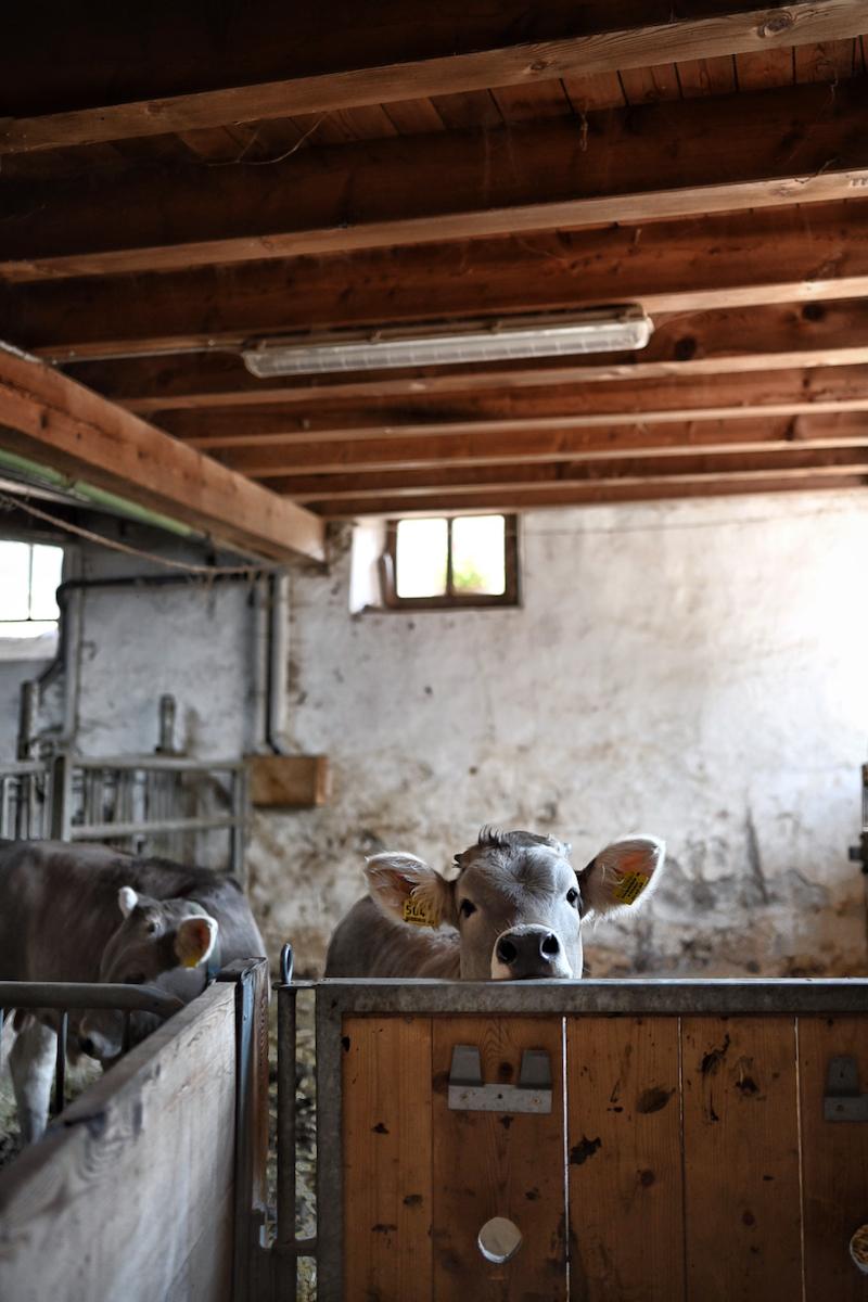 Genussreise in Südtirol Hofkäserei Englhorn trickytine